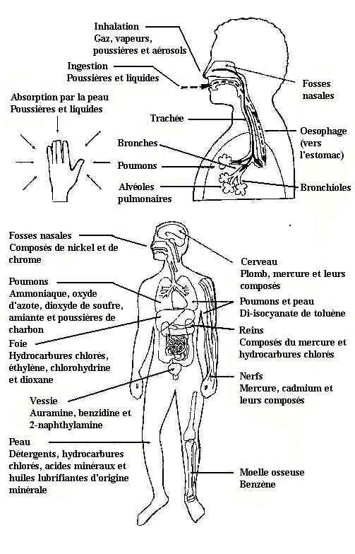 ap digestive Ruumis